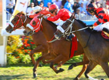 Horse Racing and the Black Economy in Mauritius